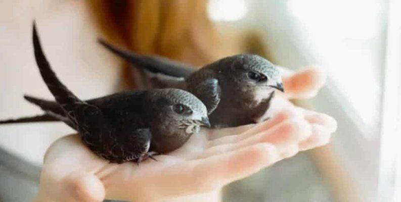 Как написать рассказ о птицах?